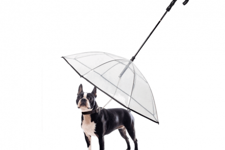 dog-umbrella